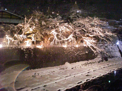 冬の中橋ライトアップ2.JPG