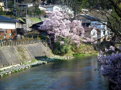 桜~飛騨高山.jpg