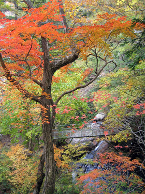 宇津江四十八滝1.jpg