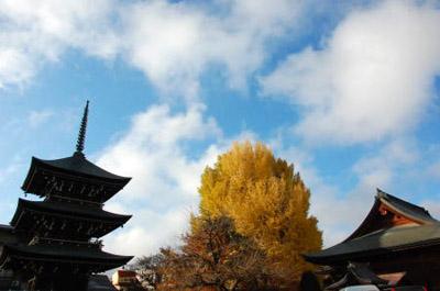 国分寺の銀杏.jpg
